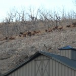 All Inclusive Activities -View of Herd of Elk in Pasture from Lodge