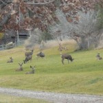All Inclusive Activities - Deer in Great Lawn