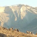 All Inclusive Activities - Morning Elk and Roan Cliffs